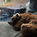 stockvault-tired-bear110002