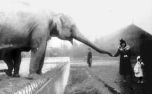 zoo przed wojną